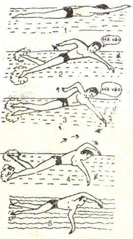 Kỹ thuật bơi sải