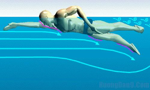 Kỹ thuật bơi sải cơ bản bạn nên học